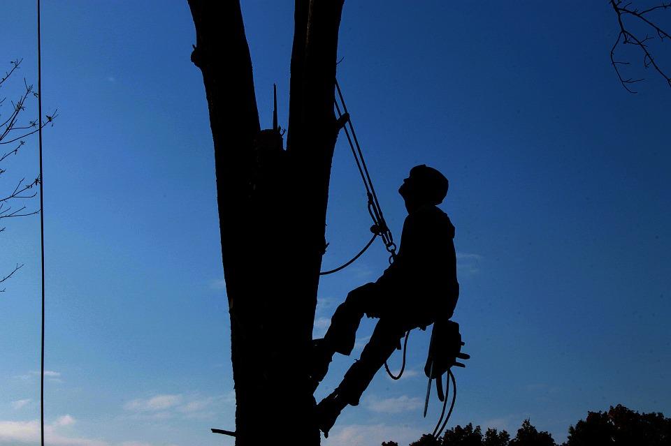 Tree Lopping Vs Tree Pruning